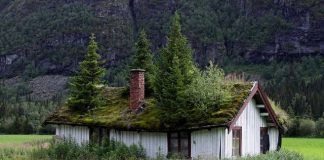 Wooden-Roof-Tiles-Covered-With-Lawn-Norwegian-roof1