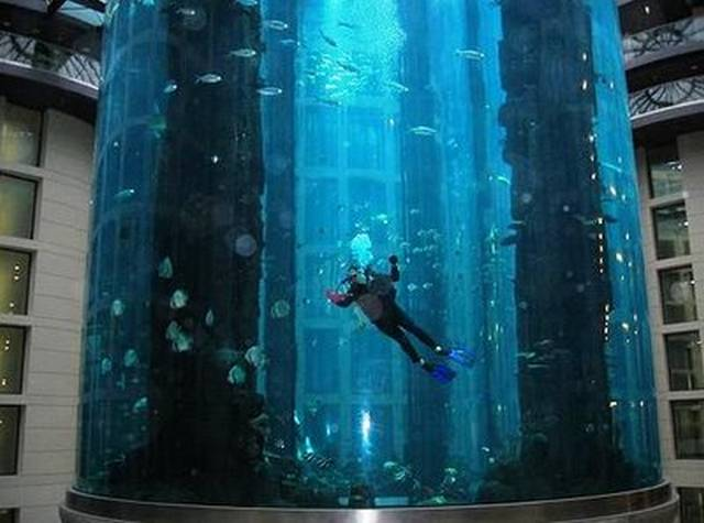 largest aquarium in the world in berlin hotel aquadom. Black Bedroom Furniture Sets. Home Design Ideas