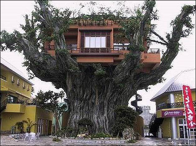 Amazing-Tree-House-Homes