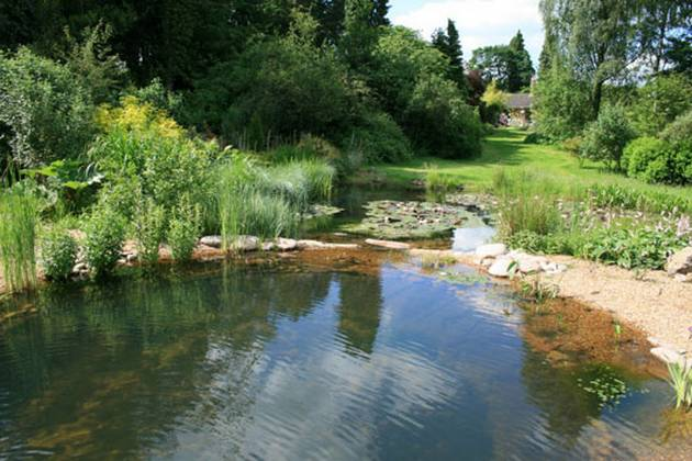 Natural Pool Designs For Small Backyards : Natural Pools can Prove to be an Excellent Home Update Idea  Updated