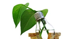 recycled_lightbulb_pot_1