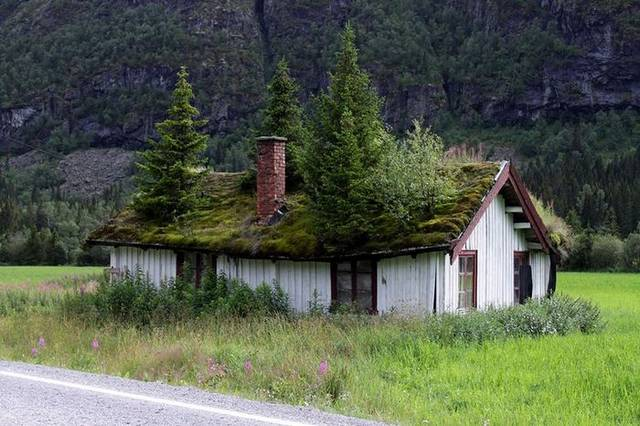 Wooden roof tiles covered with lawn norwegian roof - Norwegian wood houses ...