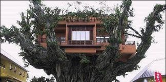 Amazing-Tree-House-Homes