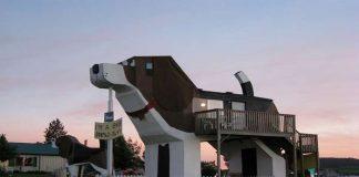 Amazing-Dog-Hotel