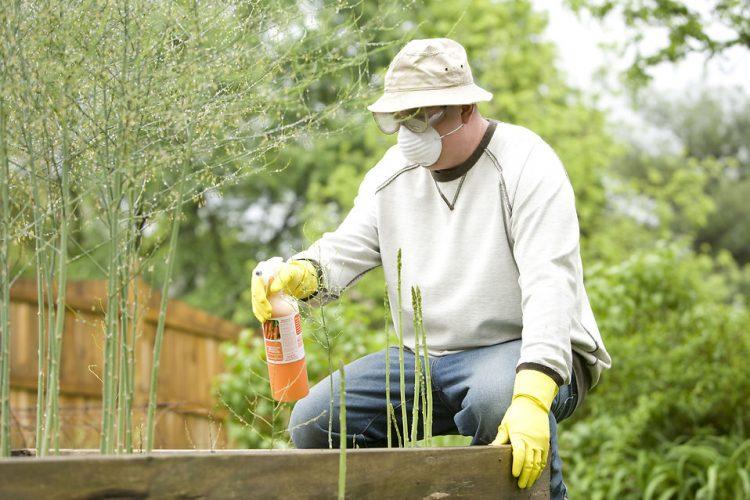 pest control mistakes